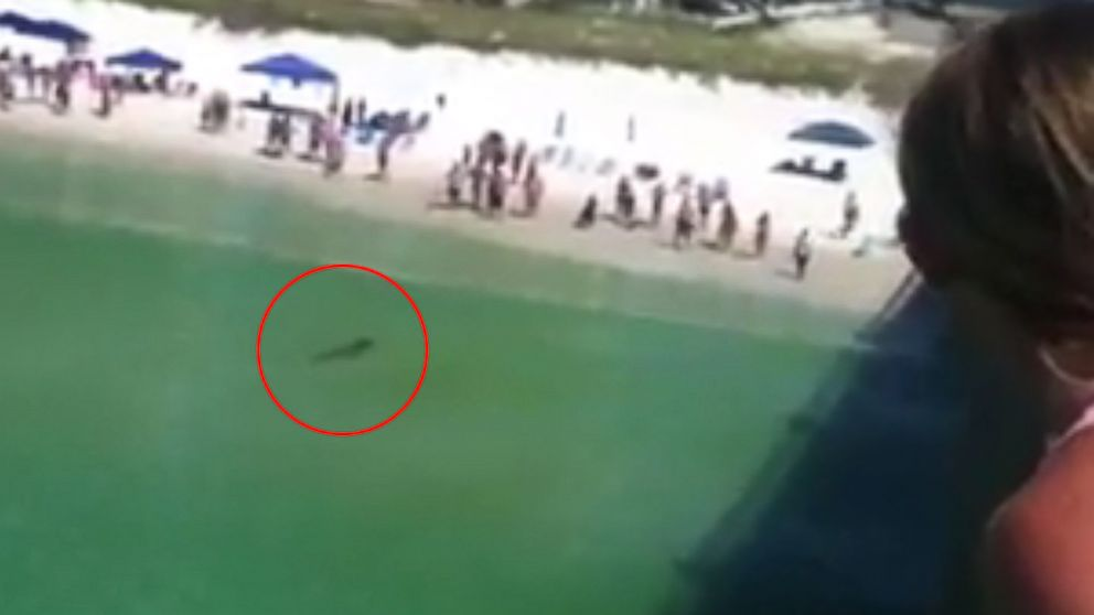 PHOTO: Dan Flynn posted video of a hammerhead shark swimming close to the beach at Navarre Beach Pier in Navarre, Florida to his Facebook on July 29, 2014.