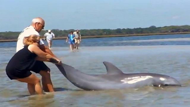 Dolphins Watch St George Island