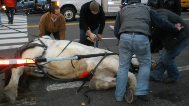 PHOTO: Another New York carriage horse falls falls to the ground, activists say holiday horses are overworked during the season, Dec. 4, 2011.