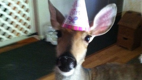 ht lilly the deer hat thg 130625 wblog Michigan Family Allowed to Keep Pet Deer