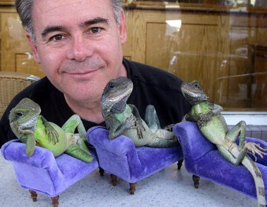 Big Pet Lizards Man Puts Pet Lizards in Human