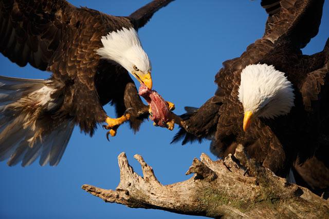ht maekawa 01 mi 130610 blog PHOTOS: Spectacular Wildlife Photography by Takayuki Maekawa