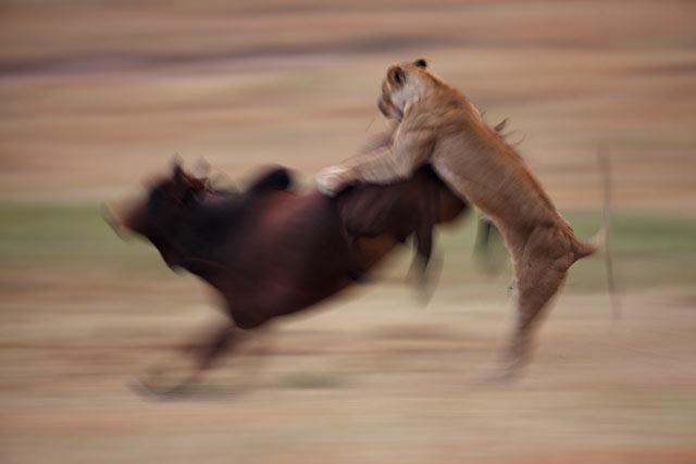 ht maekawa 03 mi 130610 blog PHOTOS: Spectacular Wildlife Photography by Takayuki Maekawa