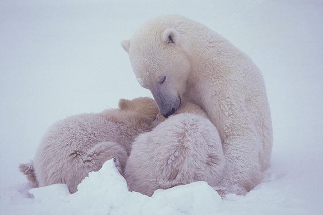 PHOTOS: Spectacular Wildlife Photography by Takayuki Maekawa