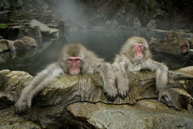 ht maekawa 06 mi 130610 blog PHOTOS: Spectacular Wildlife Photography by Takayuki Maekawa