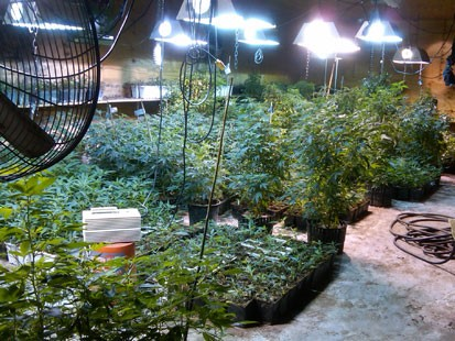 PHOTO: Andrea Sanderlin allegedly grew $3 million worth of marijuana at a warehouse in Queens.