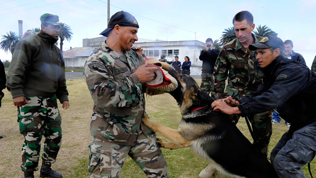 PHOTO: U.S. Navy Chief Master-at-Arms Nick Estrada, second from right, a military working dog handler from Orange, Calif., trains a Uruguayan military working dog.