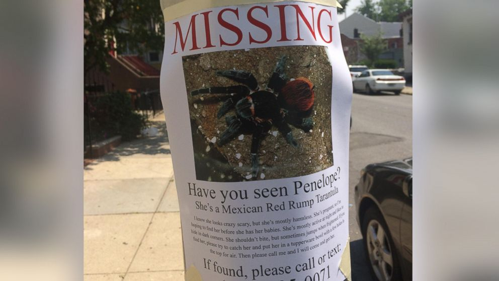 PHOTO: This flyer for a missing pregnant tarantula appeared in Brooklyn, N.Y. and was posted to Reddit.