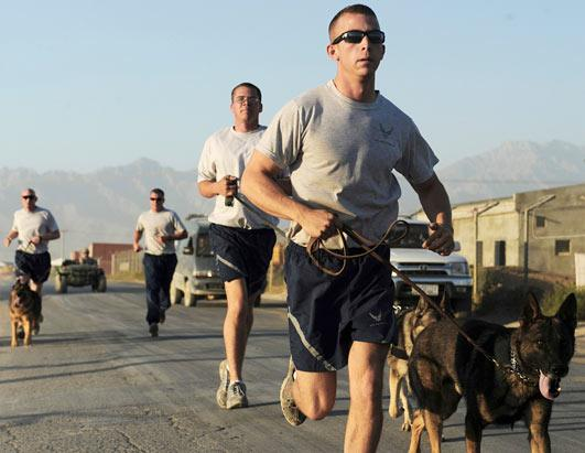 Navy SEAL Dogs Picture | Military Dog Adoptions Soar After Osama ...