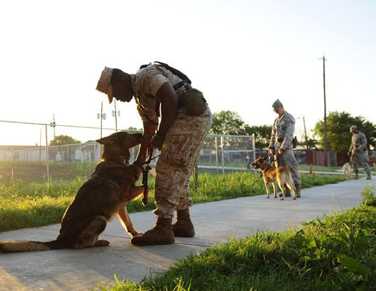 Navy Seal Combat Dogs Navy Seal Dogs