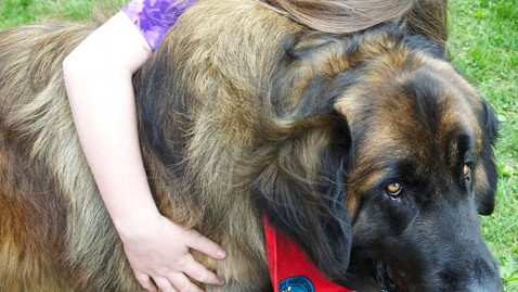 ht newtown dogs 4 mi 130624 wblog Newtown Community Thanks Therapy Dogs that Comforted Them