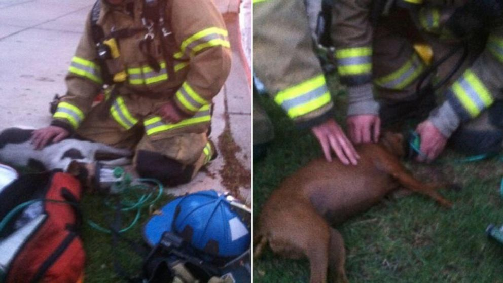 "PHOTO: The Pueblo Fire Dept. posted this image to their Twitter on May 7, 2014 with the caption, ""2 dogs were rescued and resuscitated using special masks made for animals by fire crews at the bobcat fire. #pfd."""