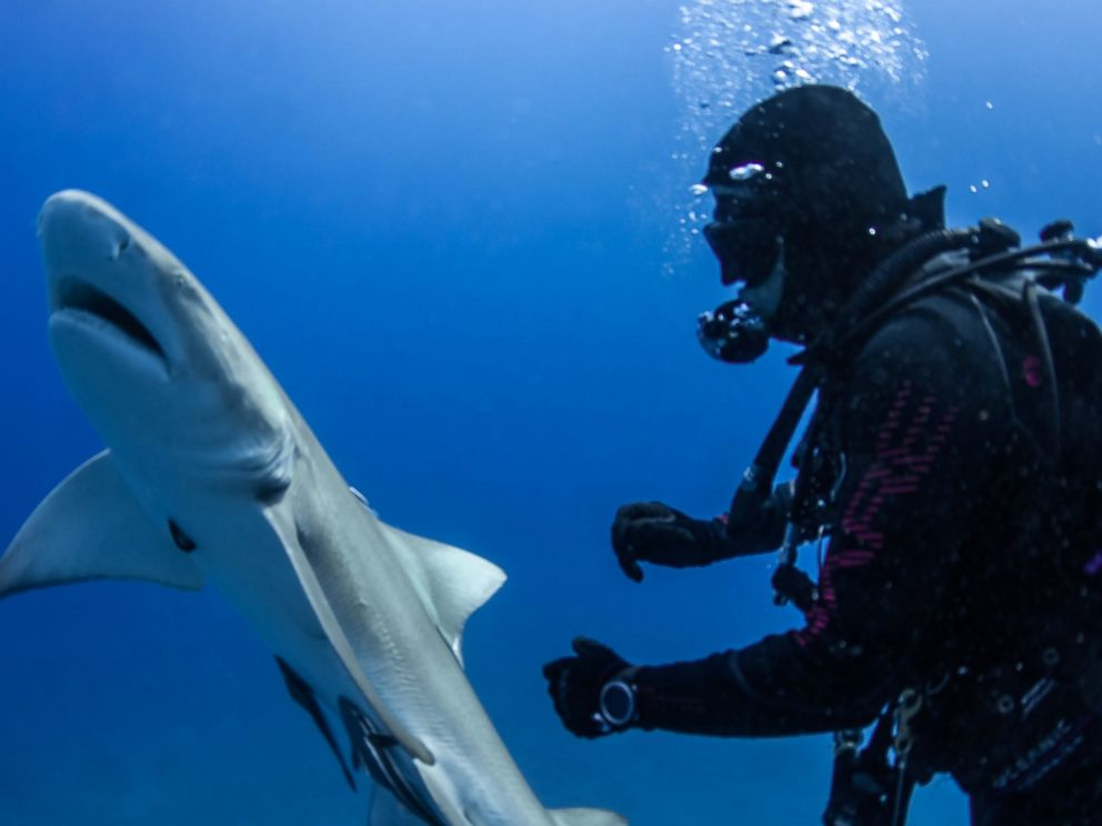 Fearless diver pulls giant hook out of shark's belly