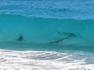 Sharks Shut Down Florida Beaches