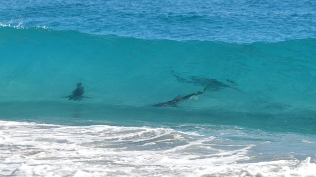 Spring Break Shark Swarm: Thousands of Sharks Shut Down Florida