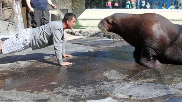 ht six flags Siku kb 140317 16x9 608 49ers Coach Jim Harbaugh Does Push Ups With a Walrus