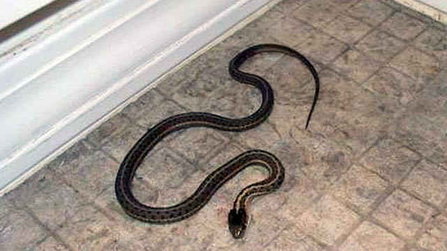 PHOTO:Snakes