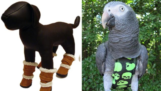 PHOTO:&nbsp;Ugg-type boots for dogs, left, and Avain bird clothing.