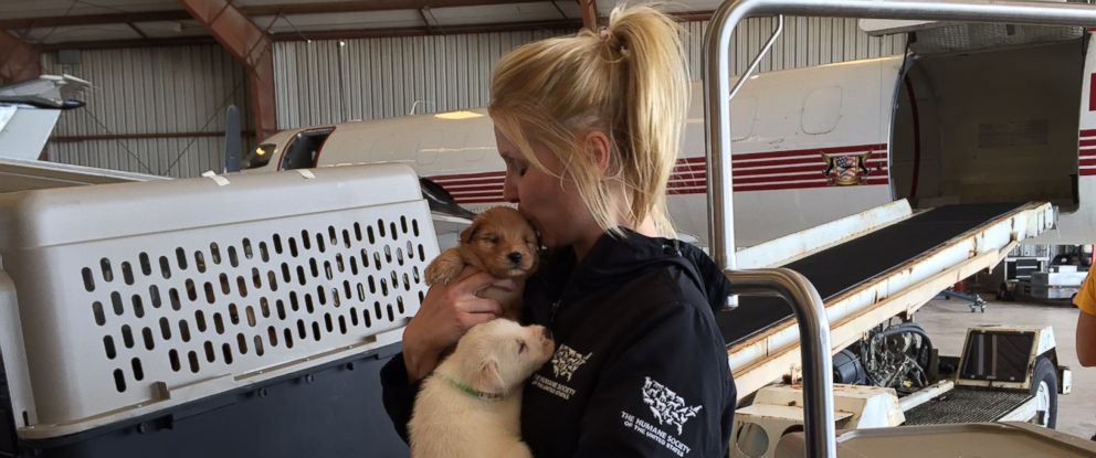PHOTO: The HSUS Animal Rescue Team has mobilized and is ready to evacuate and rescue animals as Hurricane Harvey continues to menace the Gulf Coast.