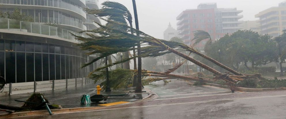PHOTO: Recently planted palm trees lie strewn across the road as Hurricane Irma passes by, Sept. 10, 2017, in Miami Beach, Fla.