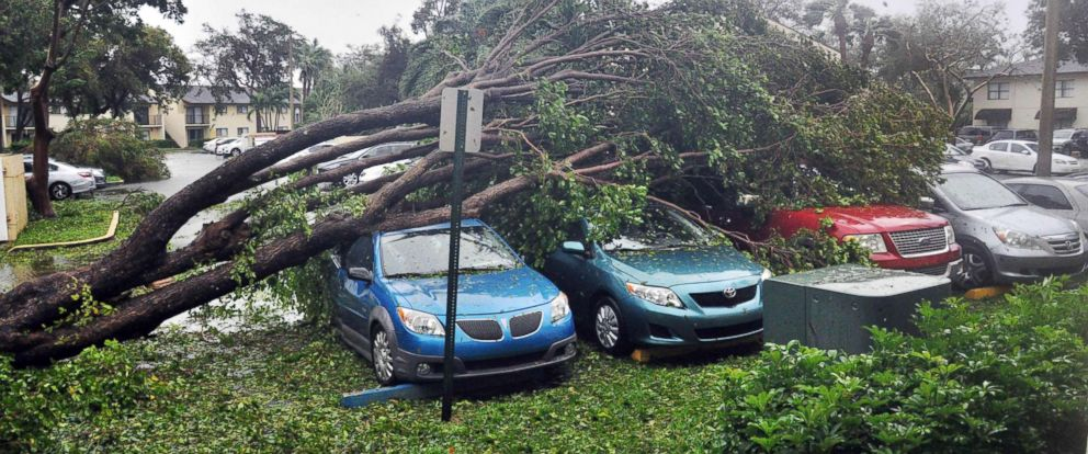 PHOTO: A fallen tree lies atop a row of cars on Sept. 10, 2017 Miami, in the wake of Hurricane Irma.