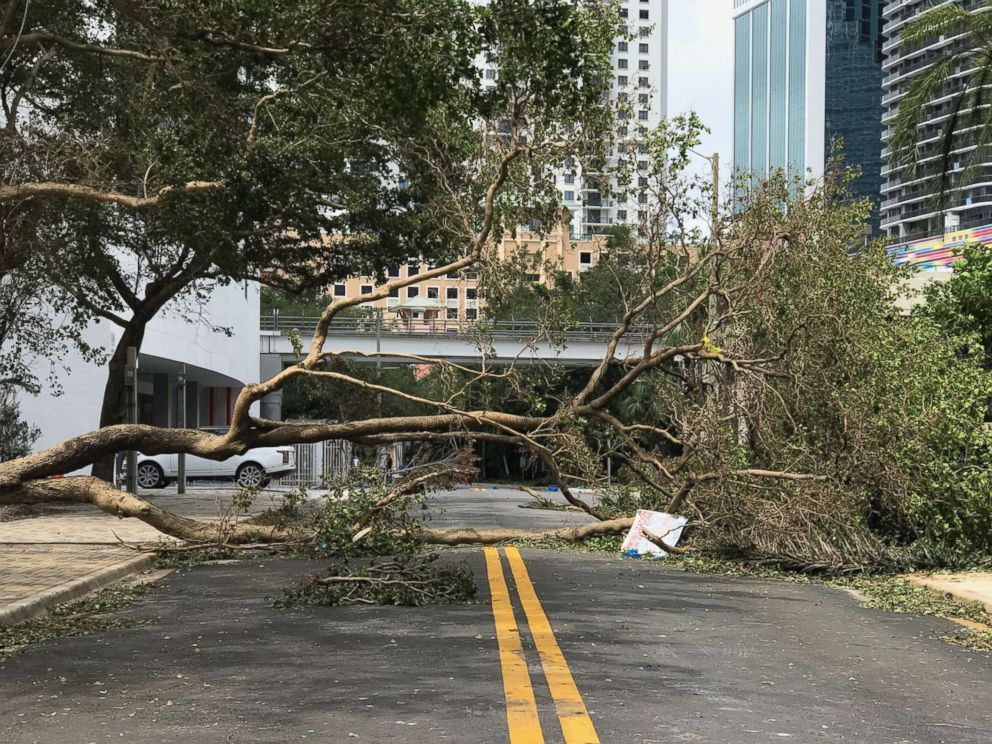 PHOTO: Trees are down in the streets of Miami in the wake of Hurricane Irma, Sept. 11, 2017.
