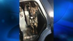 VIDEO: The police dog and its human partner were shot by a burglary suspect who was later captured.