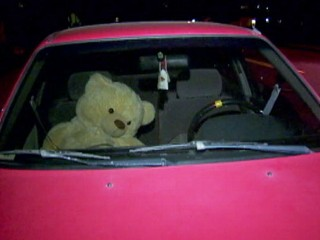 Watch: Oregon Driver Ticketed for Teddy Bear Passenger