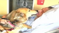 VIDEO: Kevin McClain was reunited with his dog days before dying from lung cancer.