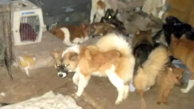 VIDEO: 93 dogs and five exotic birds were seized from a private residence.