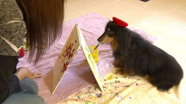 VIDEO: Long-haired dachshund and her owner sell paintings online and donate to Washington state dog rescue.