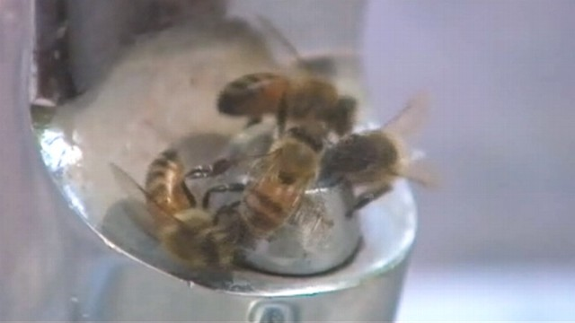 VIDEO: Insects and other wildlife invade Houston looking for water.