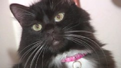 VIDEO: Janita Coombs cares for cat who faced death twice at a Utah animal shelter.