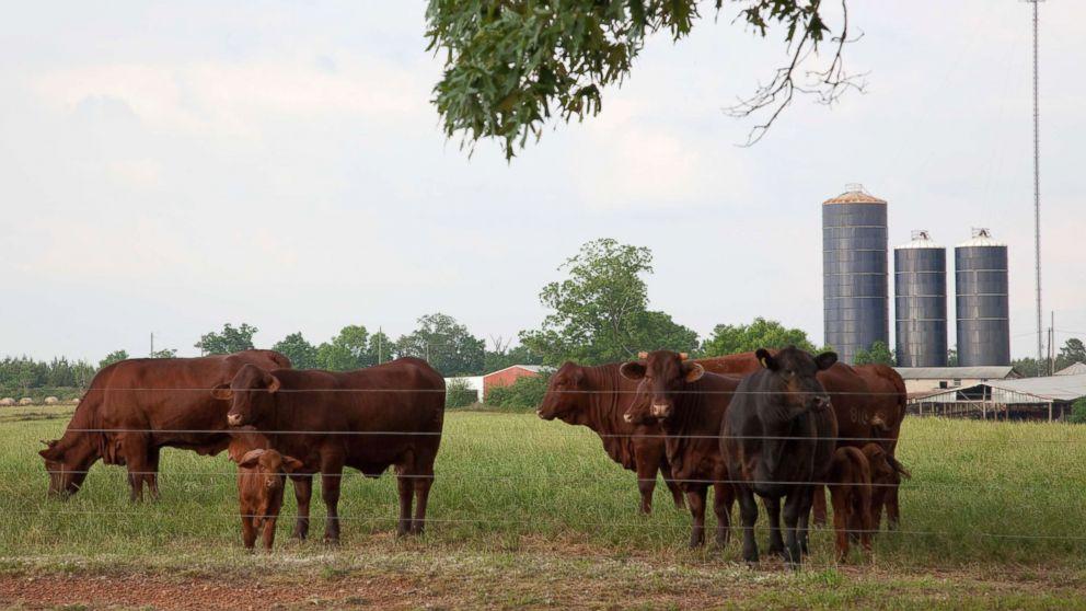 uncommon type of crazy cow illness in Alabama