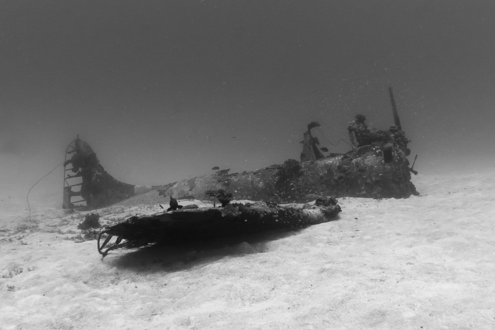 SectionsShowsABC News Network  |  © 2019 ABC News Internet Ventures. All rights reserved.Sunken World War II Allied Aircraft