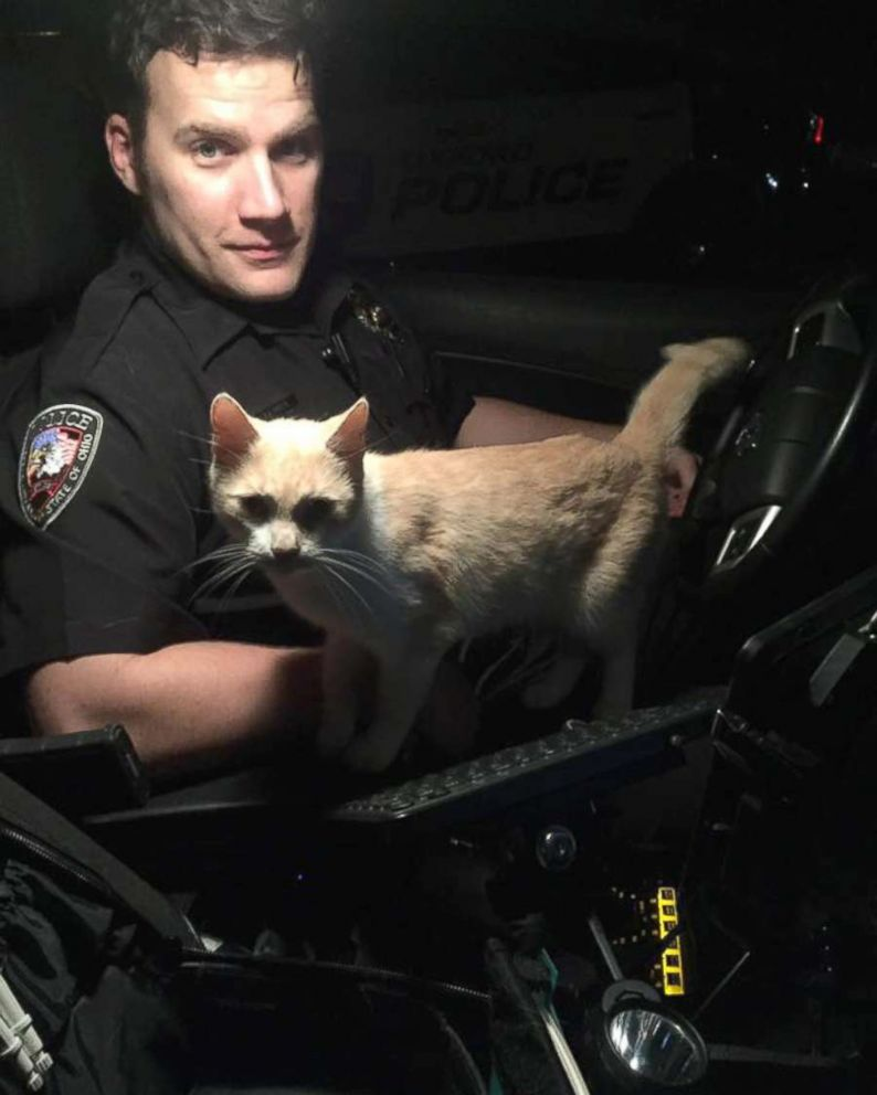 Raccoon hitches a ride on police cruiser's hood in Colorado