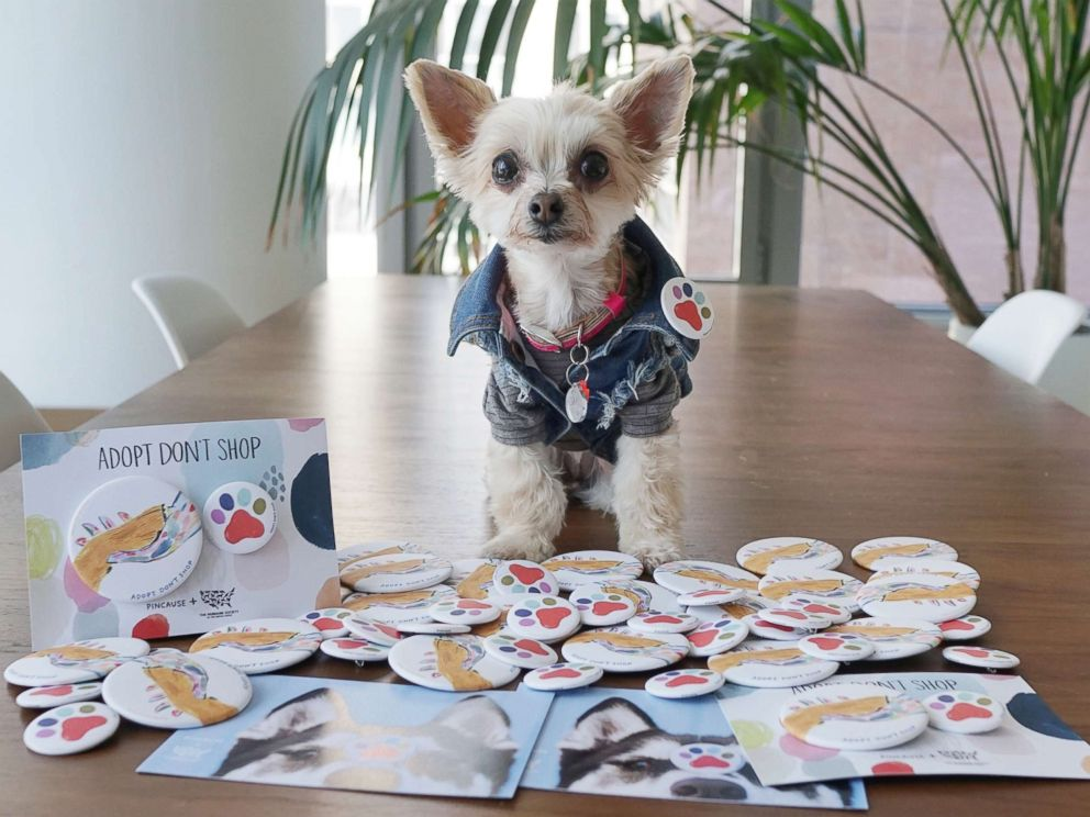 PHOTO: Ella poses with pins from Pincause, in support of The Humane Society of the United States Stop Puppy Mills campaign, during a photo shoot.