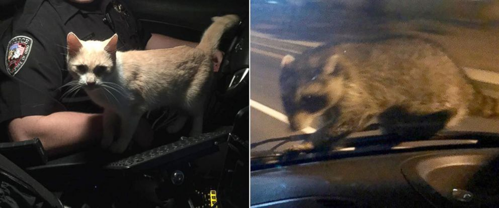 PHOTO: Cops encounter animals while on patrol in two separate cities.