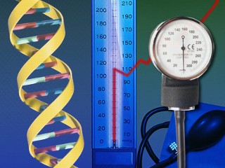 blood pressure and genes