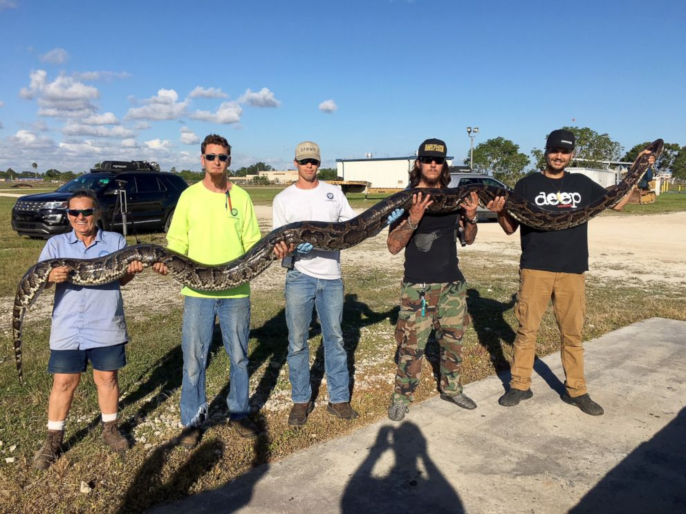 PHOTO: Python hunter Jason Leon set a record for the South Florida Water Management Departments Python Elimination Program with this 17-foot-1-inch Burmese python that he brought to the Districts Homestead Field Station, Dec. 4, 2017.