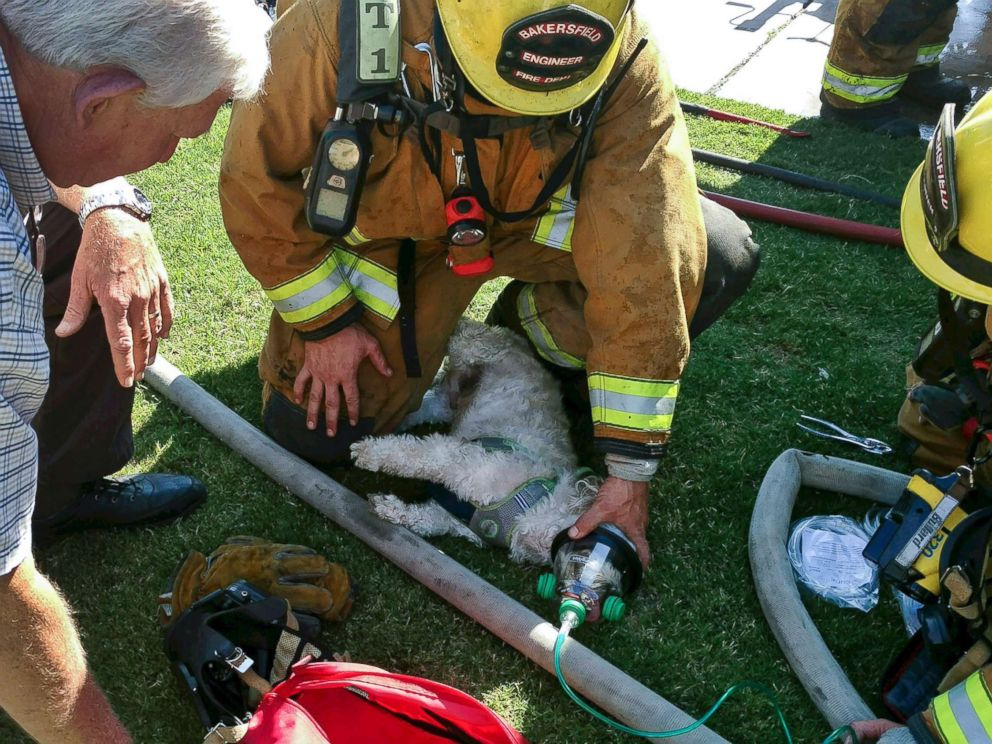 PHOTO: Firefighters provide oxygen to a small dog named Jack after pulling him from a burning home on July 19, 2017 in Bakersfield, Calif.