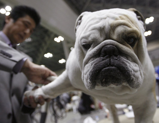 Week's Best: Bulldog Mug, More