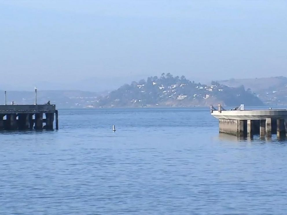 PHOTO: A swimmer was bitten by a sea lion in San Francisco Bay, the second attack on a human in two days.
