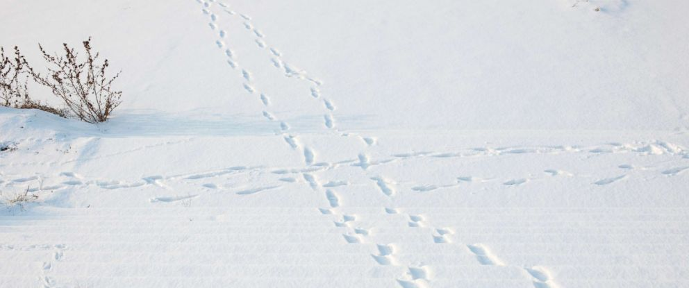 PHOTO: Snow is pictured in this undated stock photo.