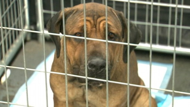 VIDEO: Emergency shelter opened after Superstorm Sandy works to find homes for displaced animals.