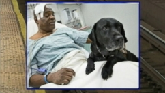 Service dog had tried to prevent man, who fainted, from falling off platform.