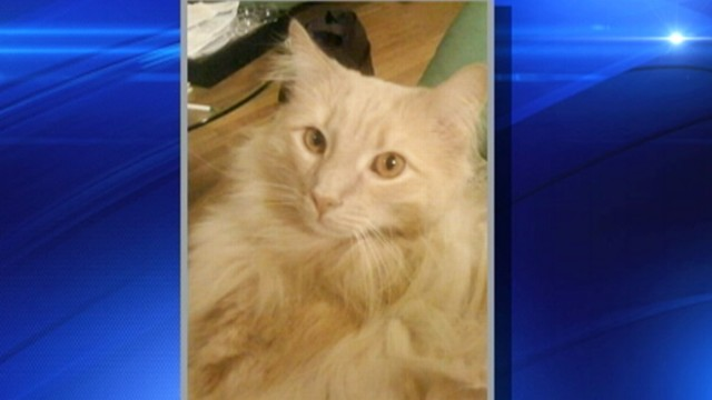 VIDEO: The cat lost for two months at New Yorks Kennedy Airport was euthanized.