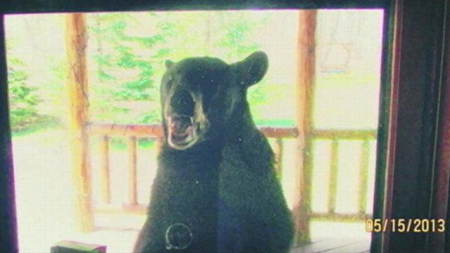 VIDEO: A Wisconsin man escaped a bears hold after his wife intervened with an empty shotgun.