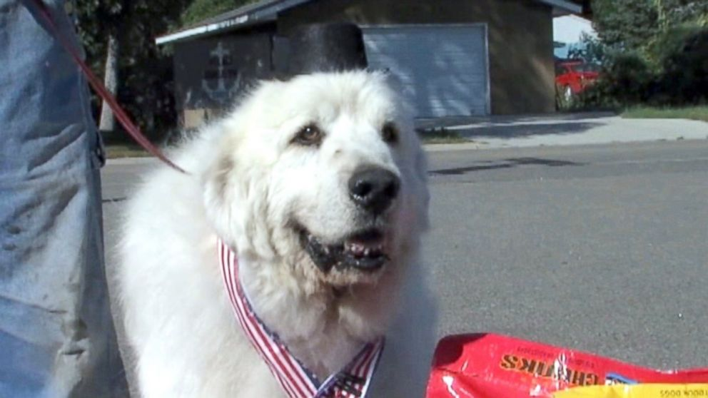 PHOTO: Voters in Cormorant, Minnesota elected a dog named Duke as their mayor by a landslide.