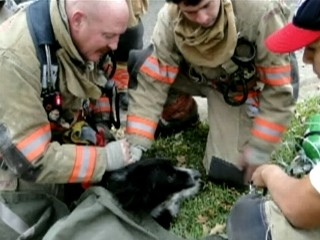 Texas Firefighters Resuscitate Dog